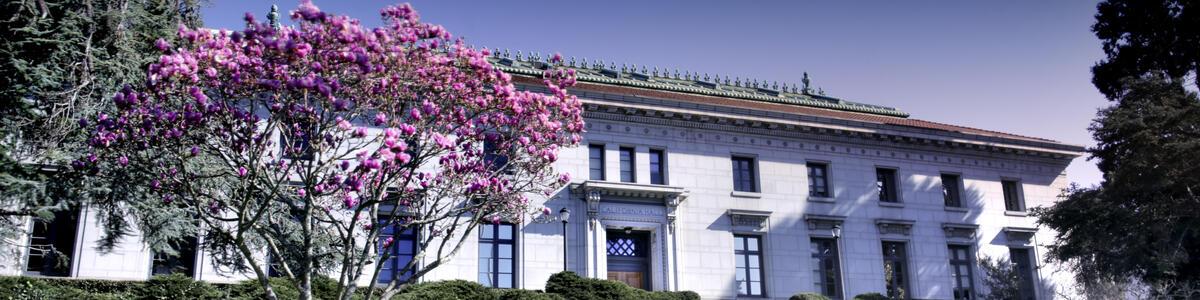 Cal Hall Magnolia - decorative